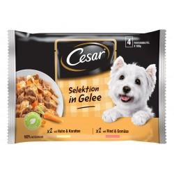 Cesar - Cesar Plic Selectii in Sos